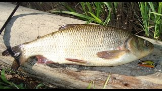 YO ZURI L-MINNOW 44 универсальный воблер по всей рыбе