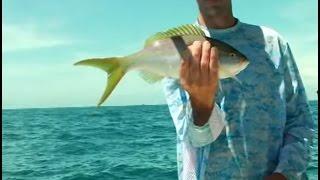 YellowTail Fishing and Amazing GoPro Underwater Action