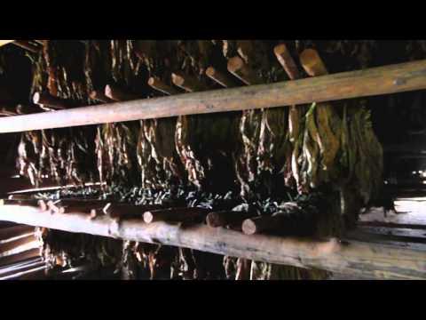 Cubaresan 2013 del7  -Vinales -Pinar del Rio