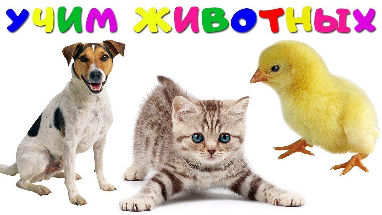 Видео Учим Домашних Животных |  Учим Домашних Животных Голоса и Звуки Животных