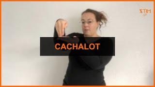 BIOLOGIE MARIN - Cachalot
