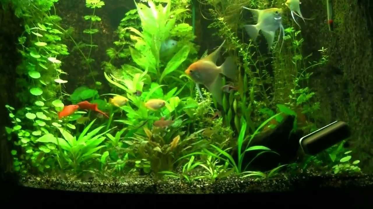 koud water planten aquarium