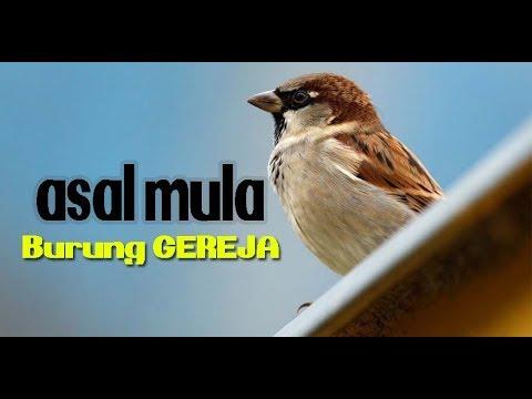 Asal Mula Burung Gereja Ust Abdul Manan Youtube