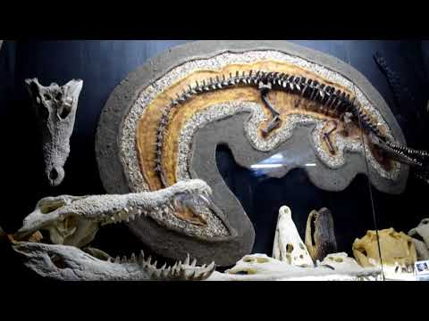 D'Bone Collector Museum Davao City Complete Video