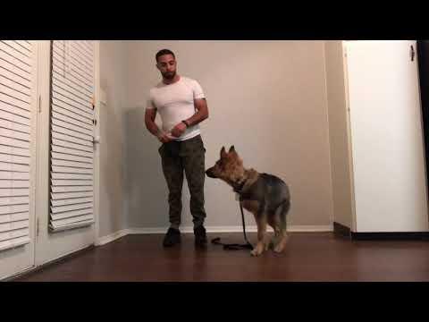 Teaching Dog To Walk Between Legs