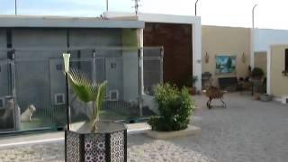 Zona Derecha De Clan Ferona - Bichon Maltes, Yorkshire Terrier, Westie