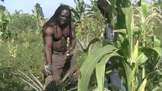Pineapple Farming in Koboko..Steven Olema