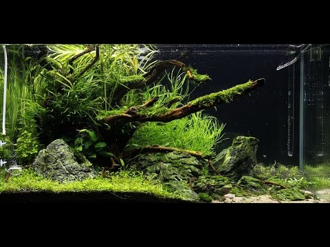 Aquascape ADA 90p - JBL ProScape -Second Maintenance ...
