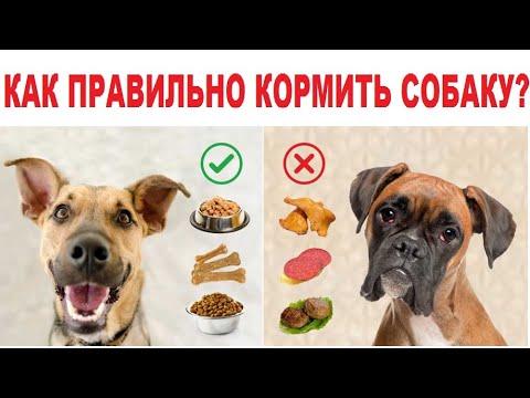 Как правильно кормить собаку. Корм для собак