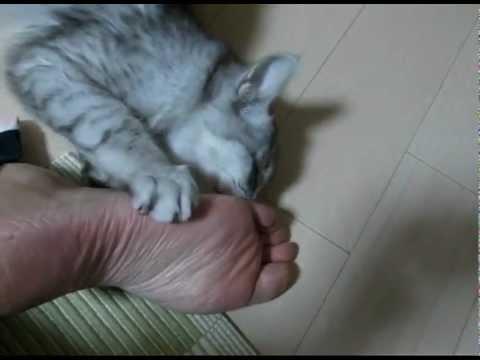 「飼主の足がくさい」と猫がうったえる