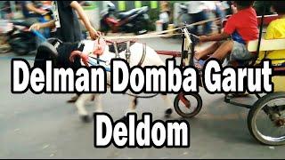 Delman Domba (DELDOM) - Garut