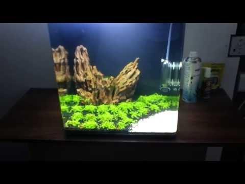 HC 'Cuba' Growth Day 11 - Hemianthus callitrichoides 'Cuba' - Shrimp Tank