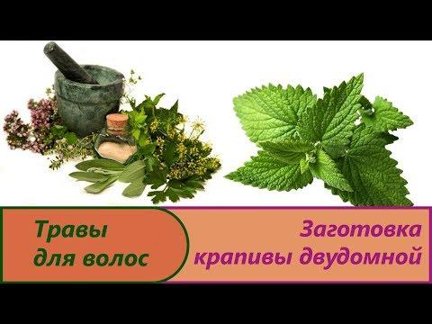 Крапива лечебные свойства и противопоказания, применению