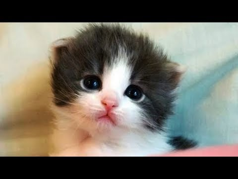 Cutest Cat Ever - Happy Cats Compilation 2018