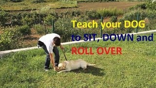 Train Me Please - Episode 3 - Train Your Dog To Sit, Down And Roll Over Using A Food Lure