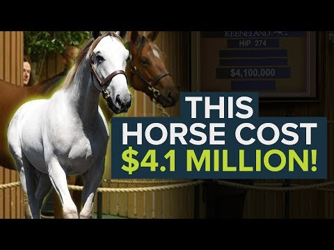 THE MOST EXPENSIVE RACEHORSE IN THE WORLD 2019