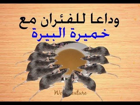 أفضل طريقة لقتل الفئران Youtube