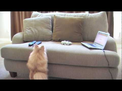 Dog plays Halo when owners are away