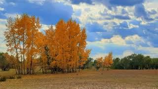 Олег Чуприн - Осенний блюз (кавер)(08.10.20)