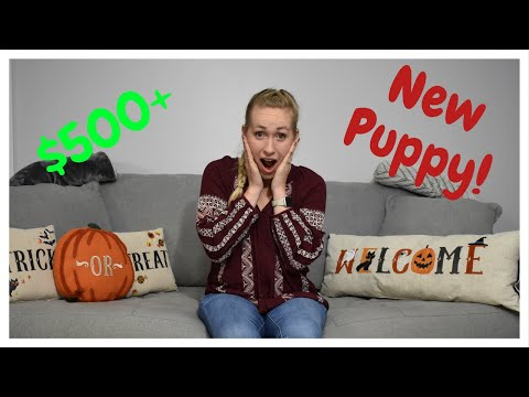 $500-chewy-haul-for-our-new-puppy!