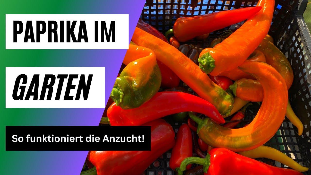 paprika auss en paprika vorziehen paprika erfolgreich. Black Bedroom Furniture Sets. Home Design Ideas