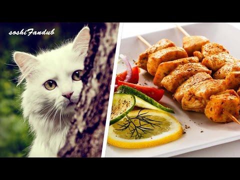 los-7-paises-donde-se-come-carne-de-perro-y-gato