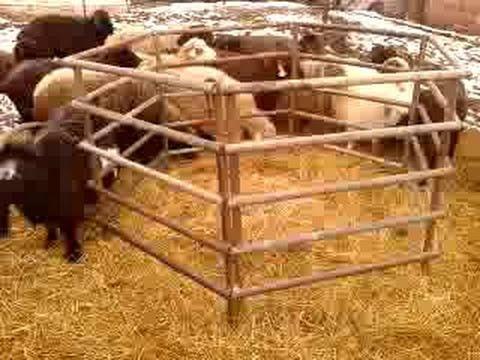 Кормушки для овец своими руками видео фото 898
