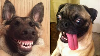 Funny Animals You Can't Watch Without Laughing 🥰😂 (CUTE)