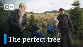O Christmas tree   DW Documentary