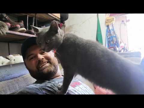Vlog #4 Ruska plava   mačka, kao psihoterapeut! 😉 ❤️Russian blue cat !