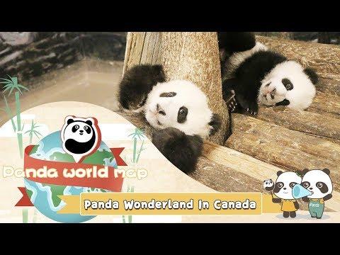 Panda World Map - Panda Wonderland In Canada | iPanda