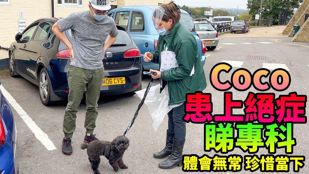 Coco患上了絕症😭😭移民英國一星期就睇左£700醫生👨⚕️要幸福呀