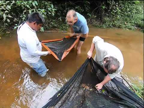 Fish Collecting Colombia 2019 #1