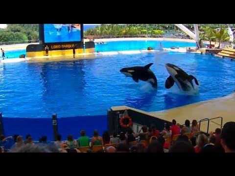 Orca Ocean - Loro Parque (Tenerife)