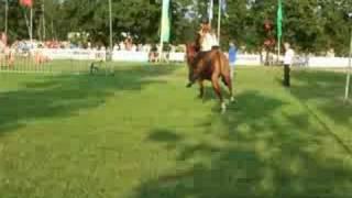 Paardendagen Driesum-Wouterswoude 2008