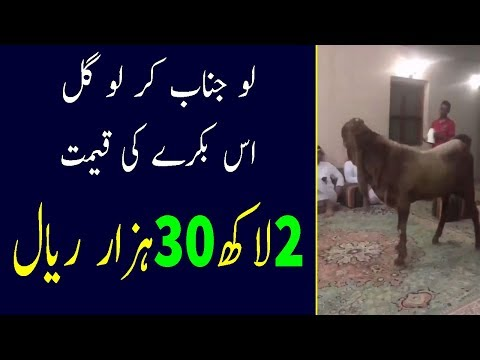 Most Expensive Goat in Saudi Arabia | Unbelievable Things In The World | Latest Saudi News Today