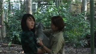 コアラを抱っこする時の注意事項です。