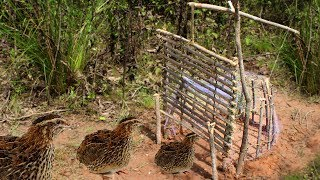 Awesome Quick Survival Bird Traps and Snares - How To Make Cage Bird Trap Work 100%
