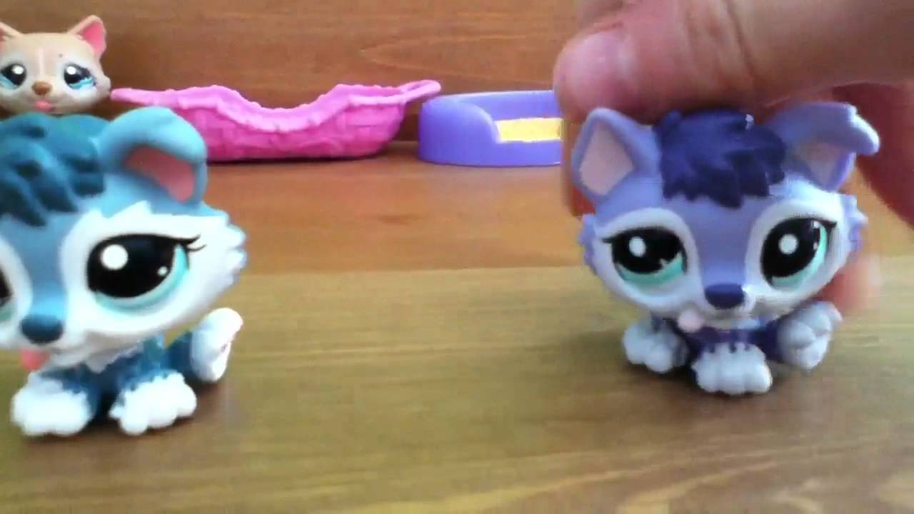 New Lps Husky Puppies