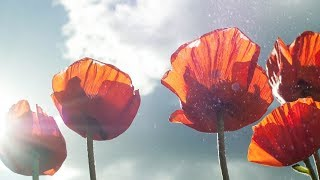"Peaceful Relaxing Instrumetal Music, Meditation Calm Music ""California Poppies"" by Tim Janis"
