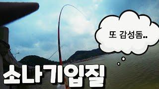[빡꾼] 민장대 생활낚시!! 바다의 황태자 감성돔 소나…