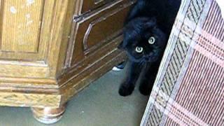 Говорящая кошка!(, 2011-11-27T19:09:01.000Z)