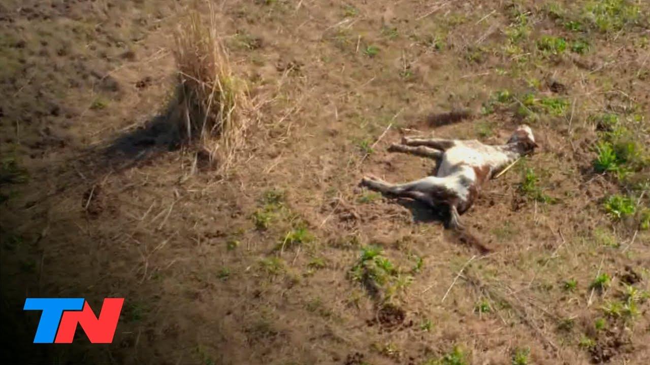 Impactantes imágenes de maltrato animal: caballos muertos y desnutridos