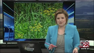 Vermont woman severely burned, all from an invasive plant