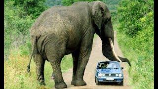 Жердегі ең үлкен жануар. / Самое большое животное на земле. / The biggest animal on the Earth