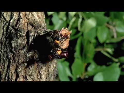 昆虫3D映画 『アリのままでいたい 』 メイキング映像