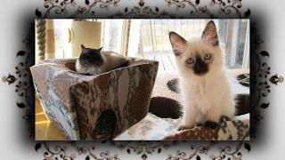 DIY 😻 Katzen Trampolin Spielhöhle aus Karton Teil 1 | Cat Game cave