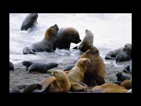 Argentina  Top 10 Tourist Attractions   Video Travel Guide