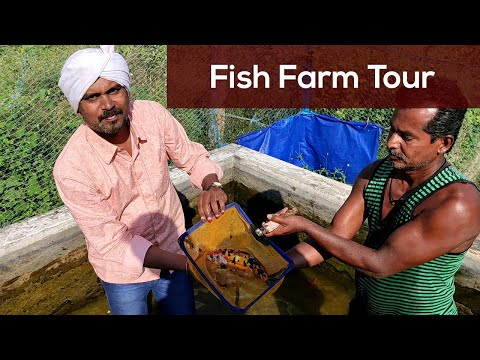 Madurai Fish Farm Tour. Guppy Fish, Koi Fish, Gold Fish , Zebra