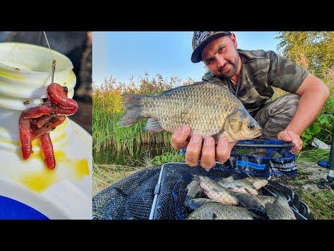 Вопрос: Насколько эффективна ловля рыбы на кусочек червя, а не на целого?